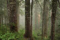 Sister Rocks (Tony Pulokas) Tags: summer tree fog forest washington blueberry fir hemlock oldgrowth huckleberry trappercreek sisterrocks pacificsilverfir