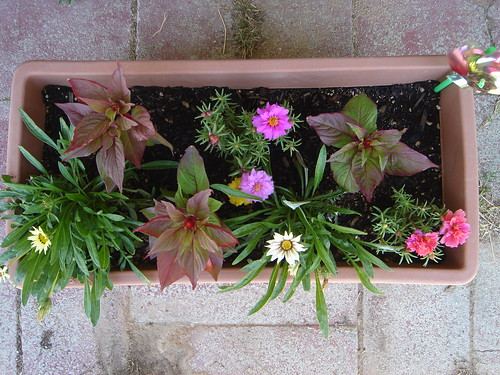 flower box three