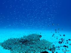 Underwater, Okinawa Japan