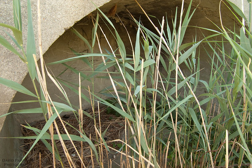 Squantum bunker