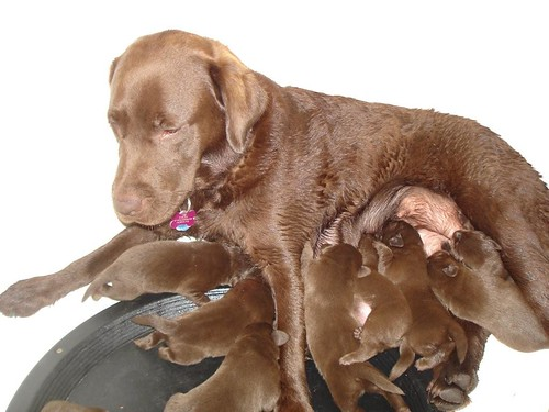 Mom & Pups
