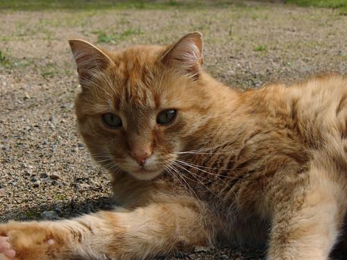 Miku (July 2010)