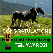 Fauna and Flora Group 10 Awards 2