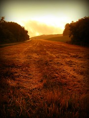 Harvested (CASSIAN0001) Tags: sunset sky clouds germany fun deutschland sonnenuntergang cloudy harvest foggy feld himmel wolken fields hazy erntezeit fujifilmfinepixs8000fd cassian0001