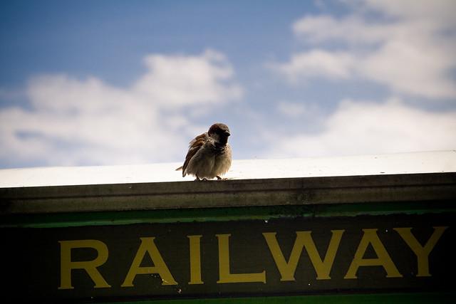 080710_ sparrow