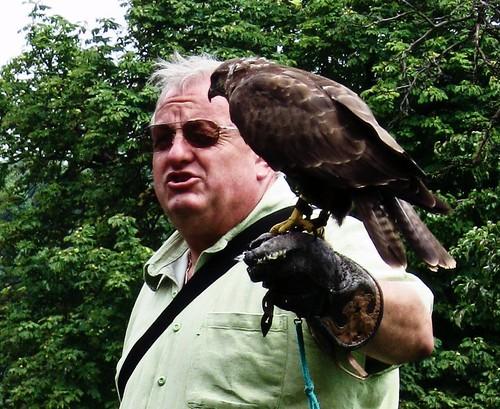 Hawk trainer