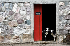 The Goat Door (matthileo) Tags: park door red stone wall composition scott zoo photo walk michigan potter lansing goat goats photowalk 2010 kelby potterparkzoo wolrdwide scottkelbyworldwidephotowalk nattywallpaper