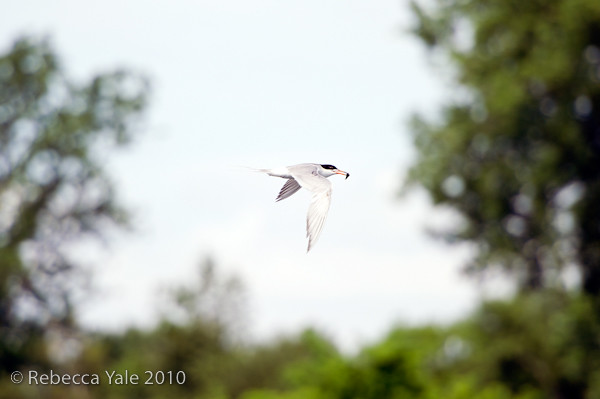 RYale_Jamaica_bay_Wildlife_Refuge_28