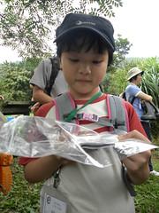賴宣羽率先發現剛出現的中國樹蟾