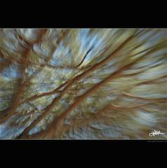 [Project 52 - 24/52] 0022 ossigeno / oxigen (guido ranieri da re: work wins, always off) Tags: trees alberi movement nikon poetry poem poesia movimento indianajones rami brenches oxigen ossigeno nonsonoglianniamoresonoichilometri guidoranieridare