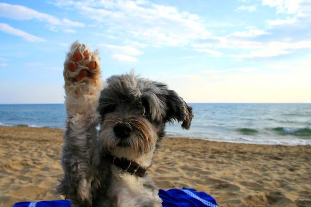 Foto cane divertente in spiaggia