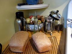 overnight wheat bread