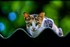 Cat Bokeh (cishore) Tags: park india cat canon zoo team hyderabad cishore kishore 2010 hws 16july nagarigari kishorencom