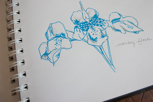 Monkey Flower drawing