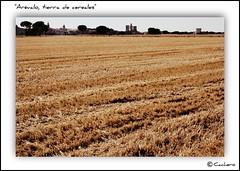 Arvalo, tierra de cereales (marioadaja) Tags: cereal paisaje paja tierra castillayleon arevalo ltytr1 cachero