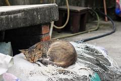 IMG_0488 () Tags: taiwan taipei    taipeicounty   houtong    catvillage rueifangtownship houtongcatstreet
