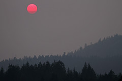 Fiery Sun on the Sunshine Coast (Peggy Collins) Tags: trees sunset red canada monochrome silhouette landscape grey interestingness haze bravo searchthebest britishcolumbia smoke explore smokey pacificnorthwest layers hazy penderharbour sunshinecoast forestfires settingsun redsun peggycollins gettyimagescanada