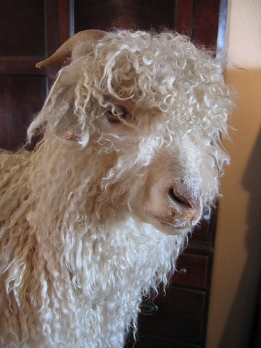 Stuffed angora goat's face