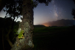 Milky Way frog (masahiro miyasaka) Tags: travel blue light vacation sky tree nature beautiful yellow japan night canon wonderful stars wonder real outdoors star interestingness nice frog fisheye explore galaxy fantasy astrophotography frogs  wallpapers alpen technique frontpage firefly lonelytree oneshot milkyway   startrail    earthandsky summertriangle  sigma15mmf28exdgfisheye  iso4000  Astrometrydotnet:status=failed eos5dmark
