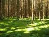 il bosco della via di MOzart