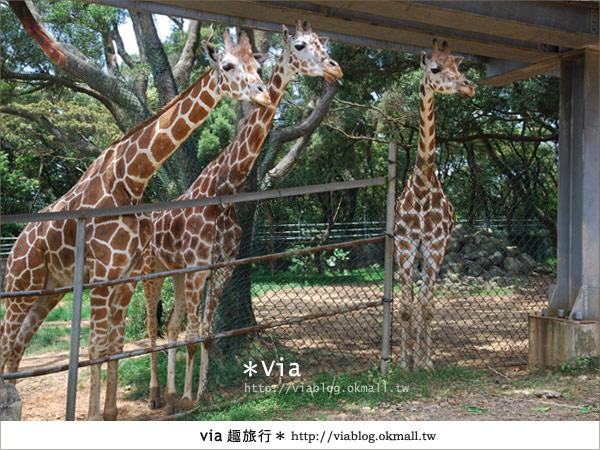 【關西六福莊】精彩秘探野生動物園/DIY手作/農趣樂~!46