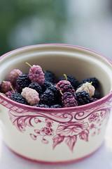 mulberries (ion-bogdan dumitrescu) Tags: summer fruits childhood fruit child sunny bowl fresh dude ruby ripe mulberry mulberries dud bitzi morusalba mg4433 morusnigra ibdp ibdpro wwwibdpro ionbogdandumitrescuphotography