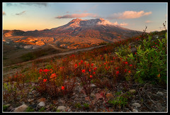 Loowit (Michael Bollino) Tags: flowers sunset mountain nature landscape outside volcano washington nikon state northwest hiking destruction alpine paintbrush mtsthelens mountsainthelens michaelbollino