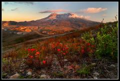 Loowit (Michael Bollino) Tags: flowers sunset mountain nature landscape outside volcano washington nikon state northwest hiking destruction alpine paintbrush mtsthelens mountsainthelens michaelbollino