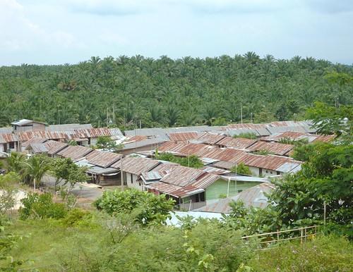 Bukit Lawang - Région (16)