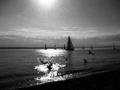 The dream of youth (Star Rush) Tags: ocean seattle camera city sunset sea urban blackandwhite bw sun seagulls beach water birds mobile sailboat boats phone gulls tide wave sparkle shore flare pacificnorthwest pugetsound saltwater iphone iphoneography vinblackwhite