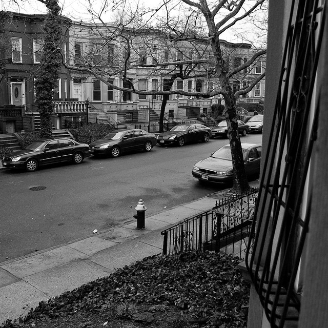 view from the stoop
