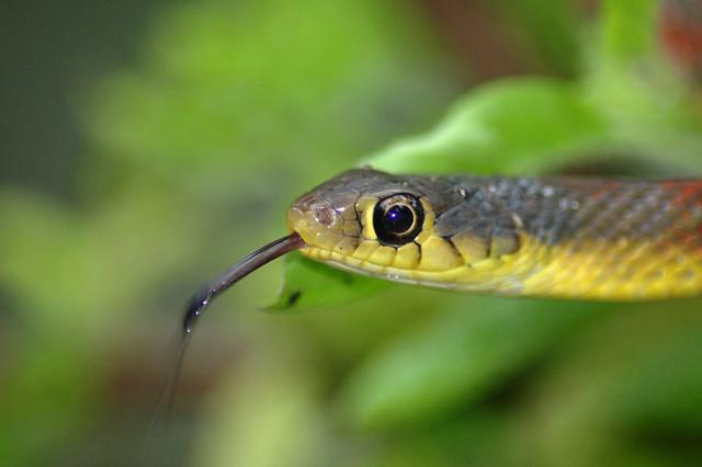 Tale of a Snake II