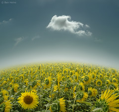 Be Unique! (Ben Heine) Tags: travel summer cloud mist inspiration france nature fleur photography lights freedom petals focus poem nuvola unique air south horizon fineart arts dream champs himmel atmosphere oxygen ciel libert cielo enjoy sunflower imaging prigord breathe t nuage brouillard emptiness nube connection tournesol sud ecosystem endless zonnebloem
