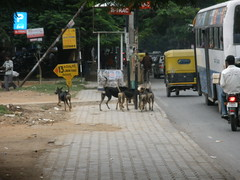 Street Dog Pack