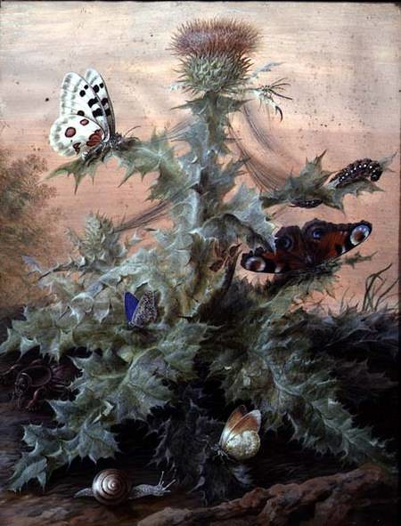 insects around a thistle..
