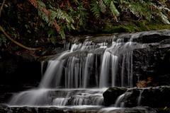 leura cascades_34-19 (willallison) Tags: longexposure nature landscape waterfall bluemountains newsouthwales leuracascades canoneos5d canonef24105lisusm