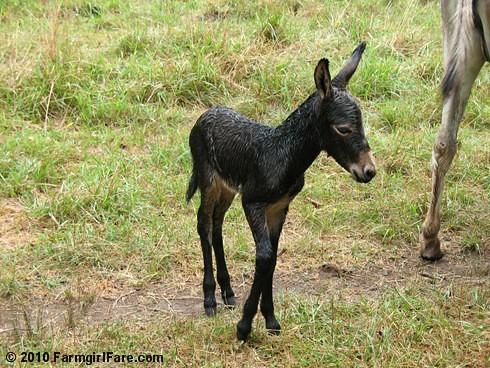 Esmeralda's Baby Boy 1