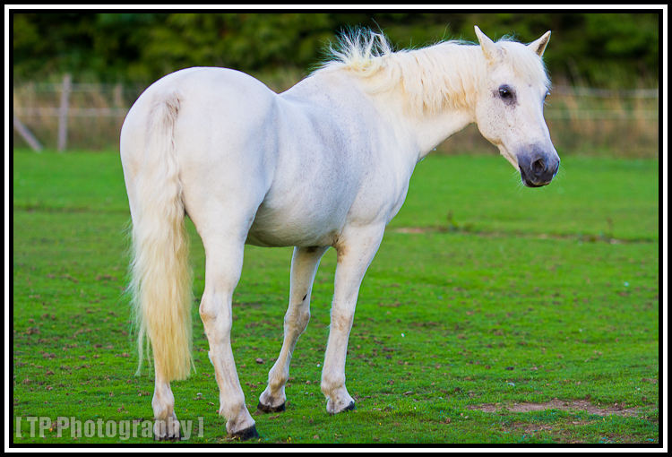 dorset horse photography