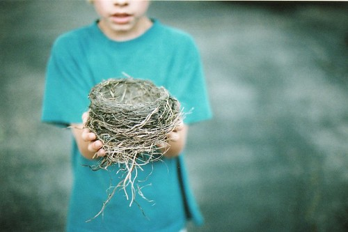 found: bird nest