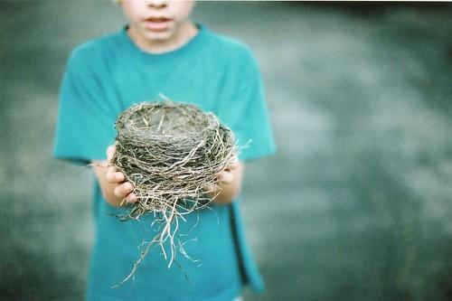 found: bird nest