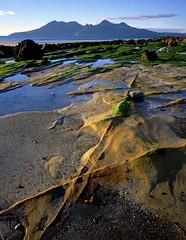 Sandstone Fins, Laig, Eigg (Richard Childs) Tags: large format landscapesshotinportraitformat