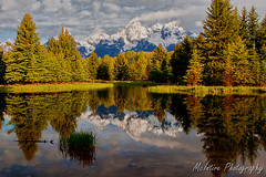 Schwabacher's Landing (RetiredTraveler) Tags: park family vacation horses landscape buffalo cows wildlife grand moose beaver landing wyoming elk eagles jacksonhole familyvacation dams grandtetonnationalpark schwabachers schwabacherslanding retiredtraveler dcph2010