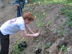 A local Scout carefully planting during the 2010 wild flower planting program