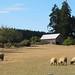 Ruckle Heritage Farm, Salt Spring Island