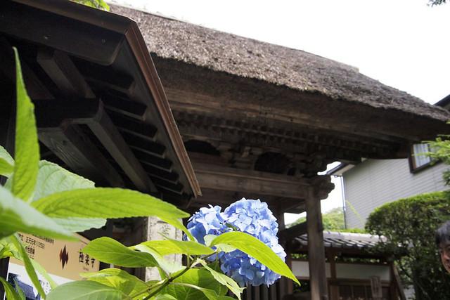 100625_093426_極楽寺