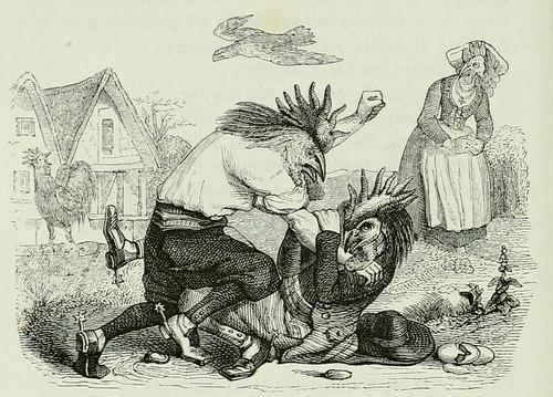 Galli Pugnantes