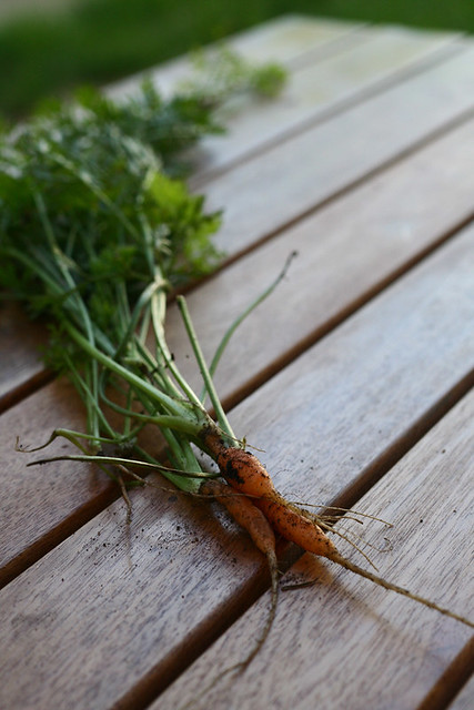 3 Little Carrots from my garden