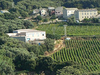 vignoble du Cap Corse.jpg