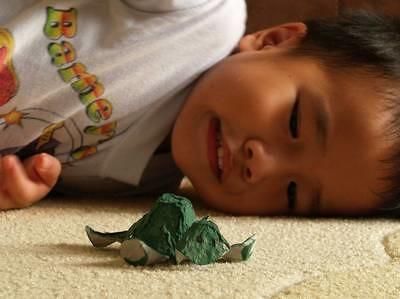 Julian's tortoise