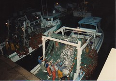 Shorty Quesada unloads King Mackerel 1988